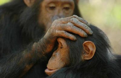 """Bild von Volker Canaris """"Geschöpfe aus Noahs Arche"""" Affen"""